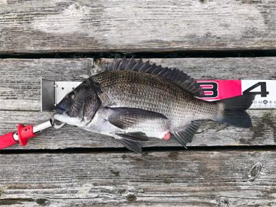久しぶりに満足の釣り