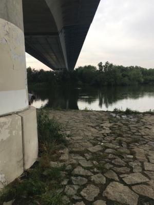 淀川 小物釣り