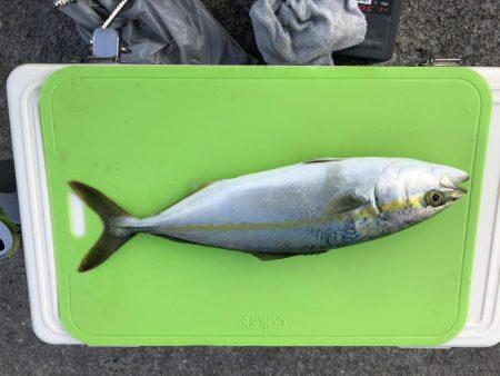 ショア鯛ラバ