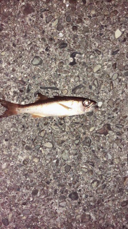 変わった魚が釣れた