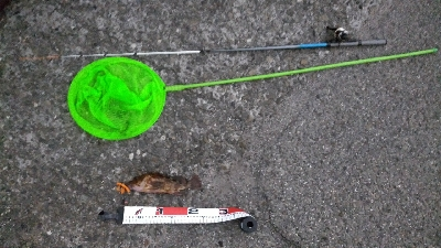 松前テトラ穴釣りでカサゴ25センチ