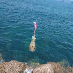 釣り場清掃からのエギング