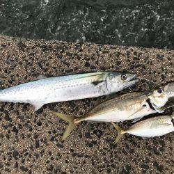 レイズは魚とたくさん出会える楽しいジグ!【シャウト(Shout!)レイズ インプレッション】