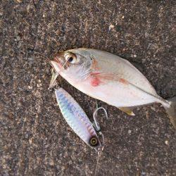 巻いて魚を寄せる力は凄い!【ハヤブサ(Hayabusa) ジャックアイグロッキー インプレッション】