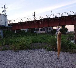 いろいろ釣り歩いたが