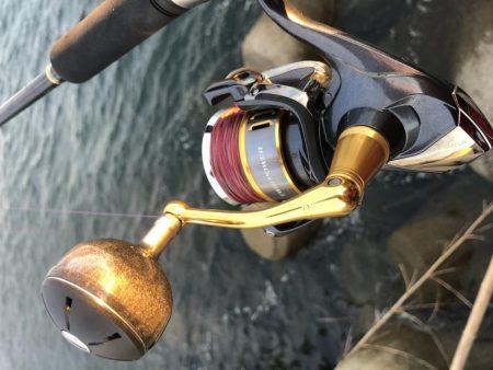 激渋太刀魚