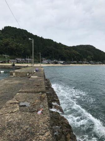 台風前のアオリイカ