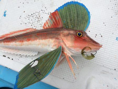 紀北  タイラバ釣果