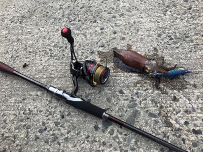 釣りの旅最終日!サゴシ、アオリイカ!