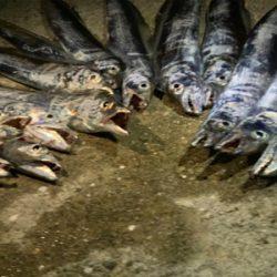 タチウオ釣果