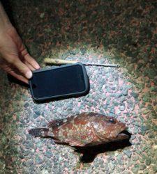 熱海根魚調査隊
