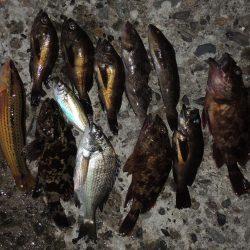 エビ撒き釣り 結局は5目釣りに