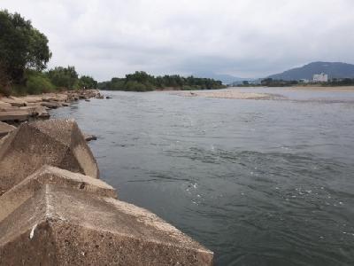 紀の川調査