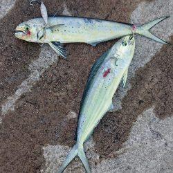 いろんな魚種が釣れました!