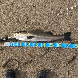 久しぶりに釣り日和