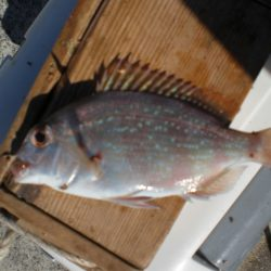 蛸も釣れる五目釣り