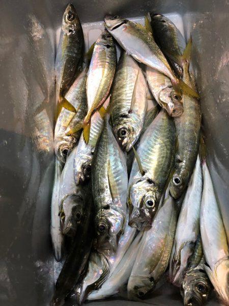TAROMARU 釣果