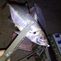 アジ釣りたくて。