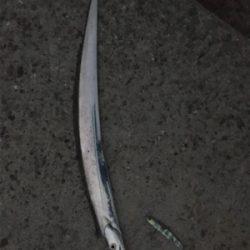 狙いの魚種と釣果があべこべ?