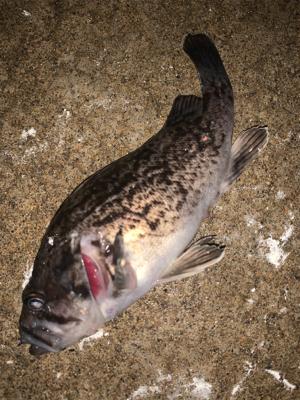 釣り人はしんどいけどお魚は元気!
