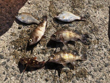 のんびりサビキ釣り