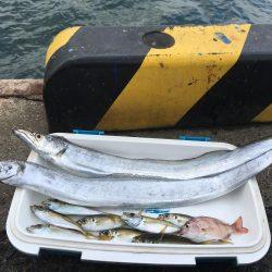 エサ釣りが渋い時はテンヤ 太刀魚