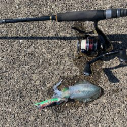 数釣り…でも小型ばかり