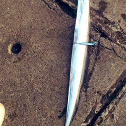 船橋港 太刀魚90cm