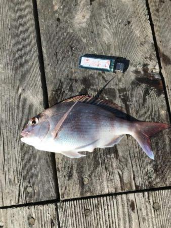 イカダのダンゴ釣り