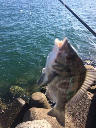 ふかせ釣り練習中!