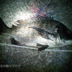 秋の上物釣り