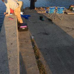 淡路島かるーい釣り