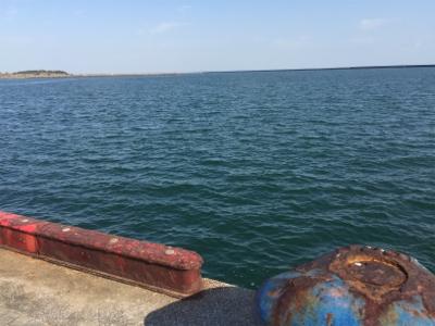 宮崎港 チヌ釣り
