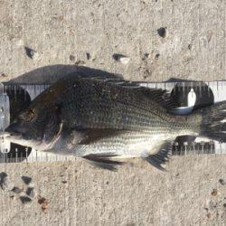 チヌフカセ釣り