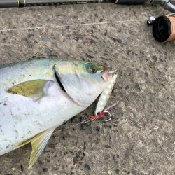 逃した魚は大きい