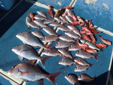 十八宝洋丸 釣果
