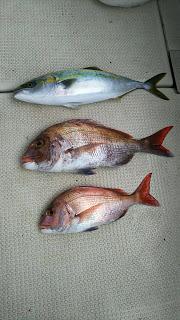 釣り舟 海竜 釣果