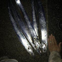12月2日神戸太刀魚、大サバ