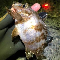 メバル釣り