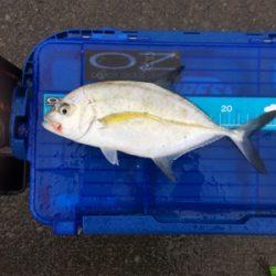 初魚種第二弾