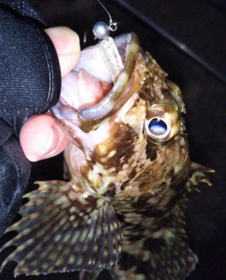 根魚に癒やされた