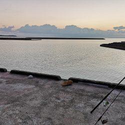 港でワーム、ギンガメアジ
