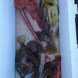 筏マルキ 釣果