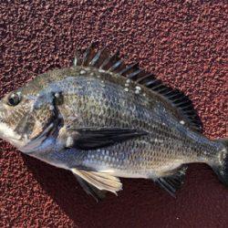 今朝は寒く魚の反応も渋いなり
