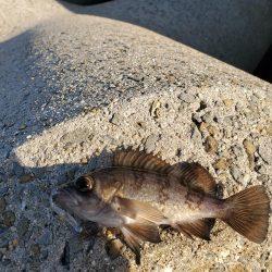 春を告げる魚