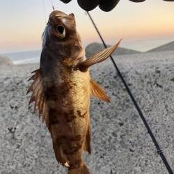 夜釣りよ今夜もありがとう!