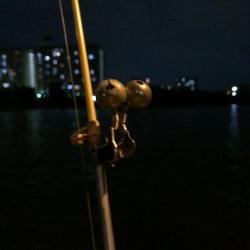 淀川のウナギ釣りパート6