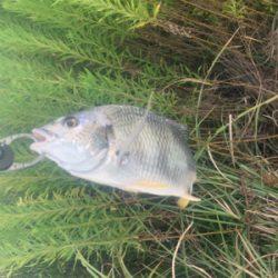 暑かったけど、釣れて良かった