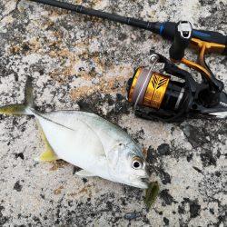 今年の初物釣れました