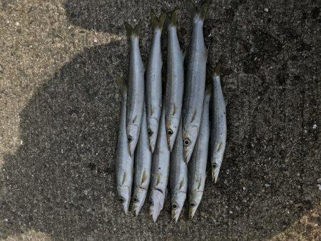 カマス釣り